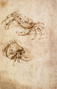 Studies of crabs - Drawing Wallraf-Richartz-Museum, Cologne