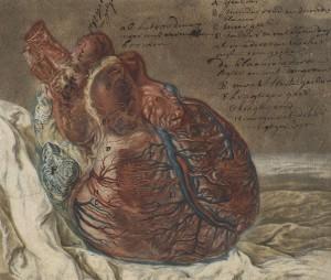 Jan I Admiral (attrib. à), Étude anatomique d'un coeur humain (détail), XVIIIe siècle
